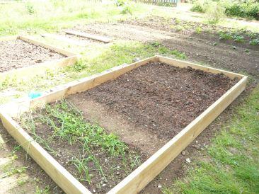 Seedlings are in